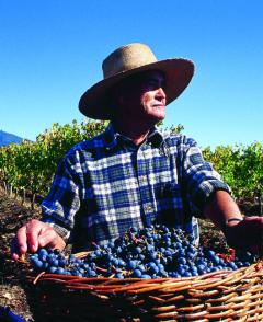 Tour - A Closer Look at Colchagua